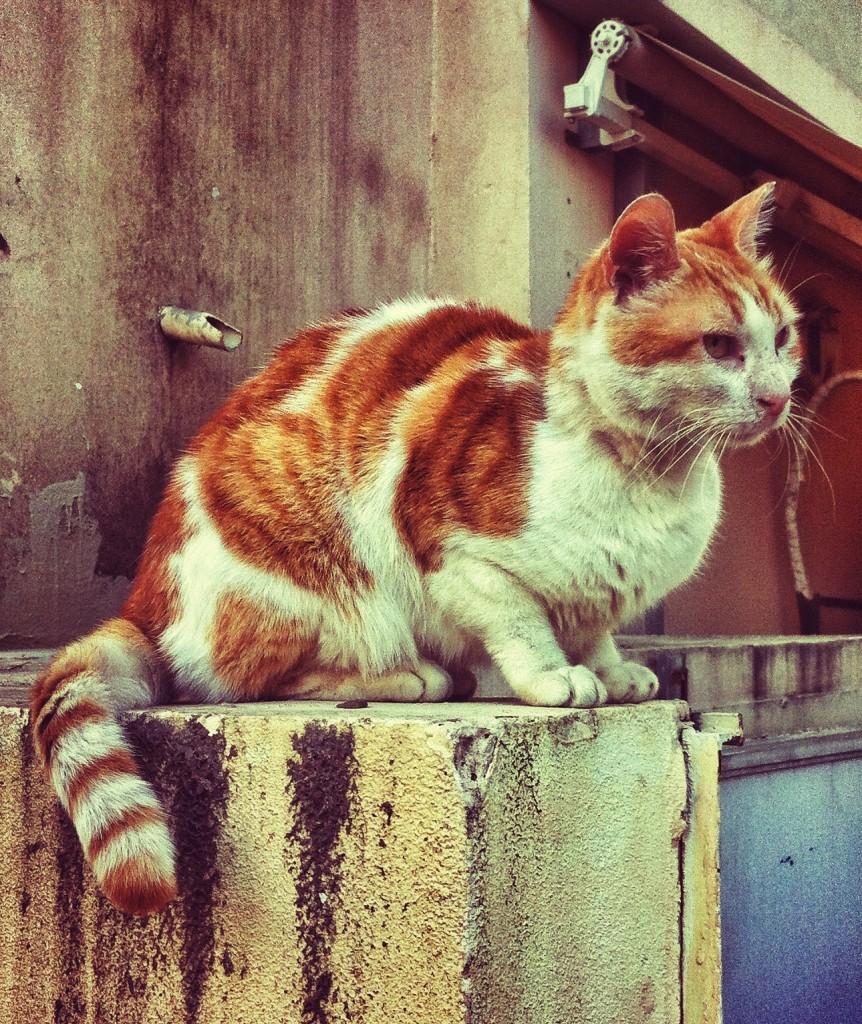 przyjemnezpozytecznym.pl kot