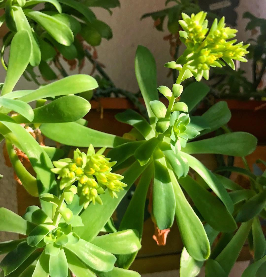 Zima zim a moje kaktusy nna przekr pogodzie na balkoniehellip