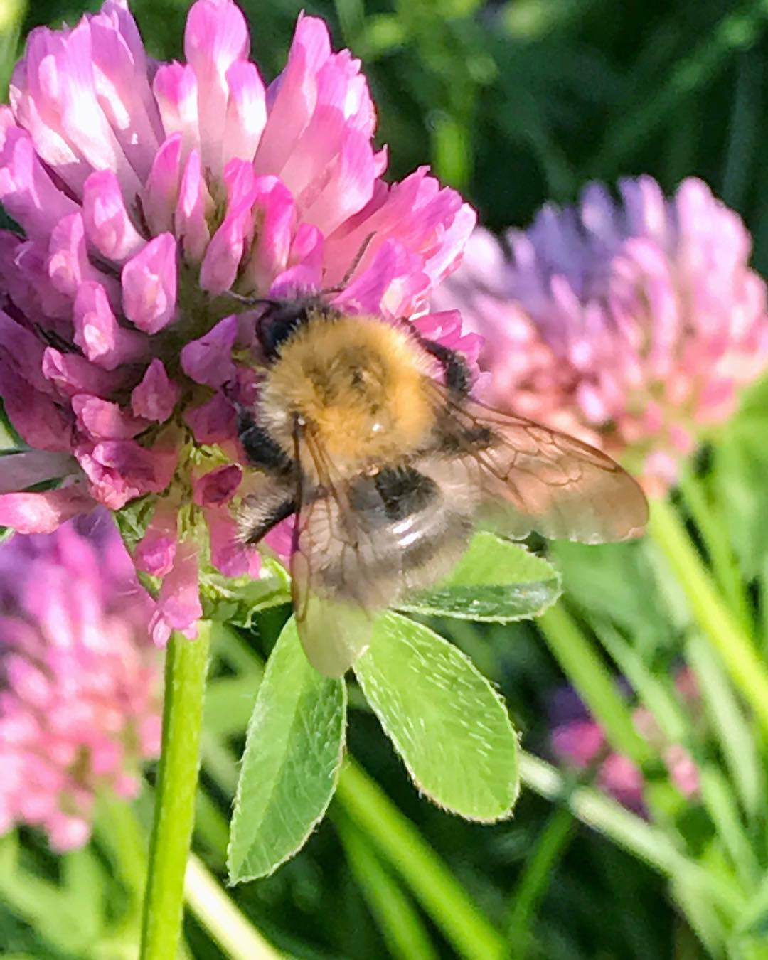 To zaklinany zim Kto si docza Miego wtorku owady powerflowershellip